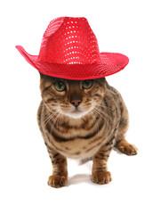 Rosetted Bengal Cat