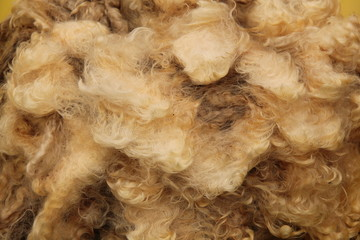 The Wool of the Fleece from a Sheared Sheep.