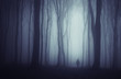 spooky dark forest with mysterious man walking on a path - 69944458