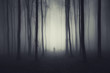 spooky forest scene with ghost on a path - 69944464