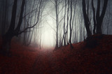 Fototapety path through a dark forest