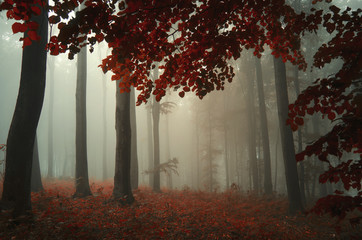 autumn in forest with colorful leaves