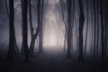 path through a dark forest at night