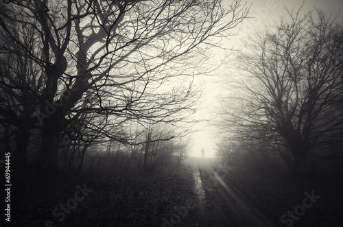 dark forest landscape with ghost