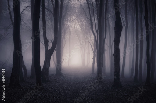 path through a dark forest at night - 69944454