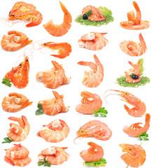 Shrimps collection