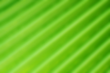Blurred palm leaf. Abstract background.