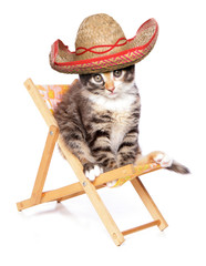 Kitten wearing a sombrero on a deck chair