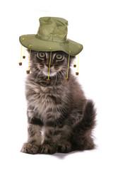 Kitten wearing Australian cork hat