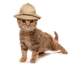 kitten wearing a safair jungle explorers hat