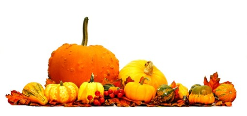Autumn pumpkin and vegetable border isolated on white