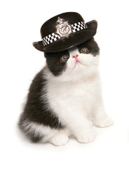 Kitten wearing womens police hat