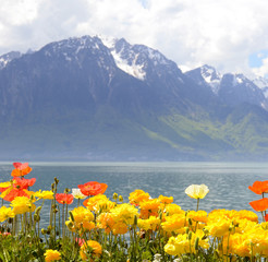 Flowers against mountains and lake Geneva. Montreux. Switzerland