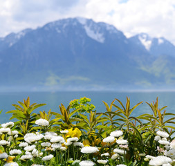 Flowers against mountains and lake Geneva. Montreux. Switzerland
