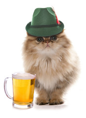 persian cat wearing bavarian beer festival hat