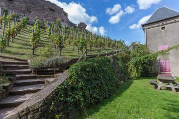 vignes en coteaux