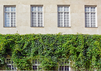 Building with Ivy