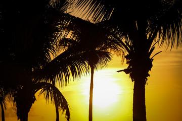 Sonnenuntergang am Strand unter Palmen