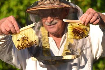 pszczelarz trzyma ramki z małego ulika weselnego w pasiece