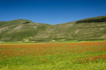 Castelluccio of Norcia - Umbria - Italy