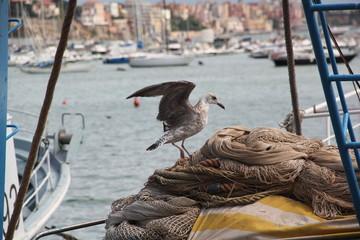 Gabbiano su una rete per pescatori