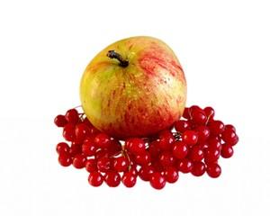 Спелое яблоко и красные ягоды калины изолировано
