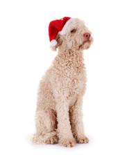Genervter Hund mit Nikolausmütze