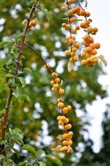 Erntezeit - Apfelgarten