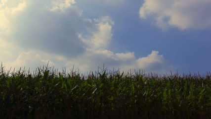 Clouds and Corn_tl01_hd