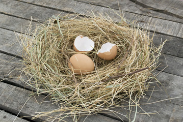 Close up of egg and broken eggshell in nest
