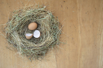 Egg and broken eggshell in nest on brown background