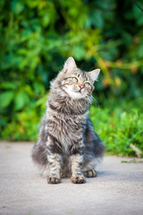 Beautiful tabby cat sitting outdoors