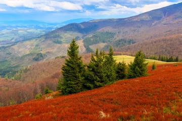 Mountain landscape in Carpathians