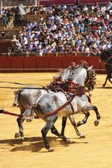 Caballos andaluces al trote, Andalucía, España