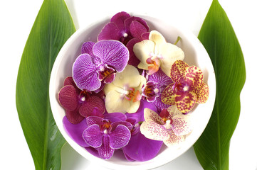 Colorful orchid with green leaf
