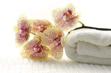 Still life setting with Orchid and spa items in background