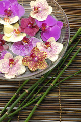 spa concept with orchid in a bowl and thin bamboo
