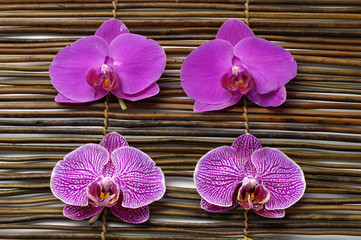 Spa composition of beautiful pink orchid