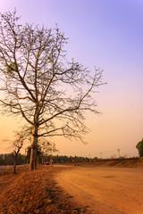 Thailand Tree Sunset