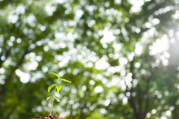 朝日を浴びた新芽