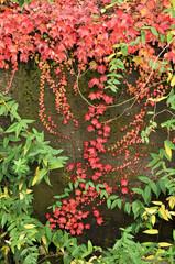 Herbst in Indutriegebiet