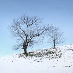 Lonely winter trees