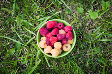 A bowl with raspberries