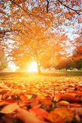 Autumn tree park