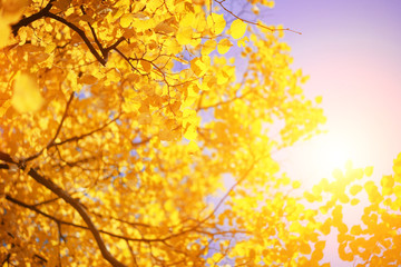 Yellow autumn leaves over sunny sky background