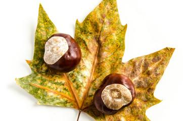 Kastanien mit Herbst Blatt