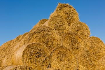 Rolls of hay