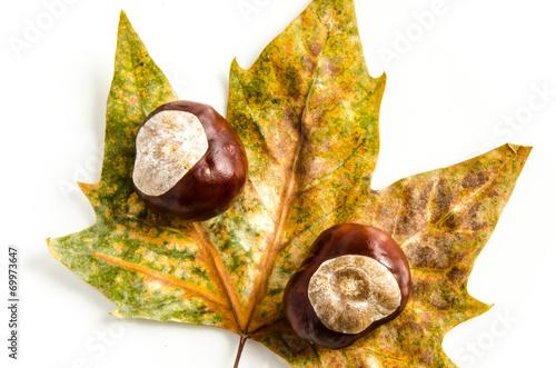 canvas print picture Kastanien mit Herbst Blatt