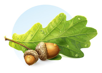 autumn acorns with green leaf