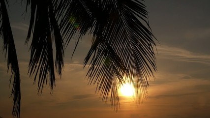 Tropical Sunset, Palm Trees and Big Sun. Slow Motion.